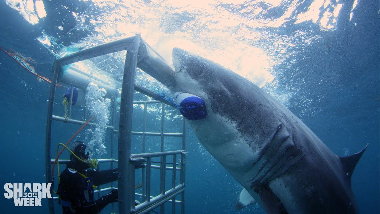 How to watch Shark Week 2019 without cable: Livestream guide