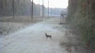 Stupid Hunter VS Stupid Deer