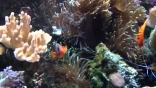 Морской аквариум Aqua-zen(, 2013-09-05T15:32:52.000Z)