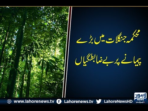 Forest Department exposed to be involved in embezzlement of Rs. 1 million