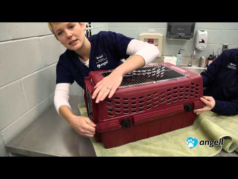 How to Put Your Cat in the Carrier