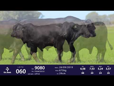 LOTE 60 - TAT 9080 , 9088
