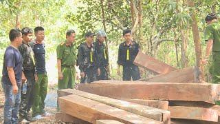 Công an Đắk Lắk triệt phá một vụ phá rừng quy mô lớn ở Ea Kar