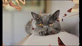 Сухой корм для стерилизованных кошек грандорф (grandorf) sterilised кролик с рисом. Отзывов: 0. Купить в 1 клик. Hit. Наполнитель для кошачьего туалета fresh step (защита запаха) 3,2 кг · наполнитель для кошачьего туалета фреш степ (fresh step) тройная защита запаха впитывающий.