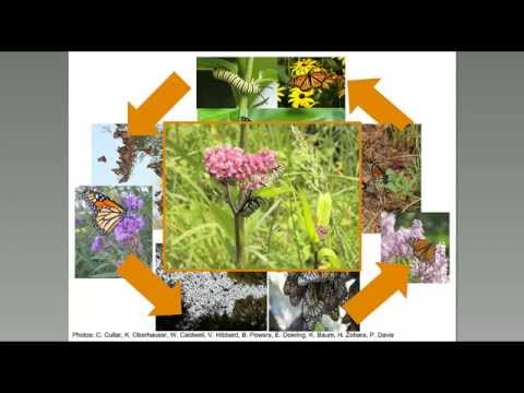 Monarch Biology and Conservation Basics