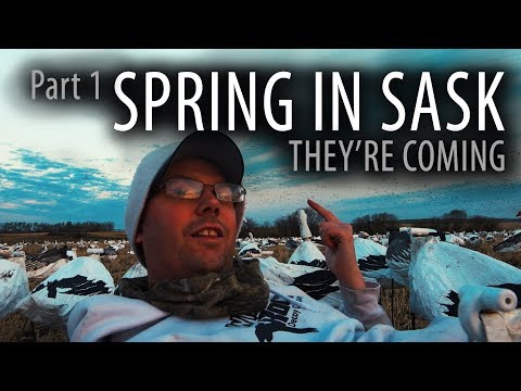 Spring In Sask | Snow Goose Hunting Canada | Part 1