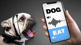 Gadget That Translates Animal Language