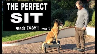 Teach Your Dog SIT on Command - Perfect SIT - Robert Cabral Dog Training Video