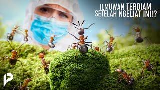 Lagi Lagi Alquran Terbukti Benar! Ilmuwan Sampai Kaget Setelah Meneliti Semut Ternyata Bisa Bicara