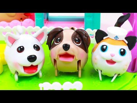 🐱  Adorables Cachorros Patosos 🐶   Nuevo Amiguito