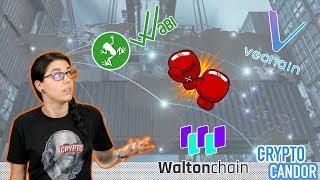 Walton vs. Vechain vs. WaBi | Supply Chain Part 1 of 2 |