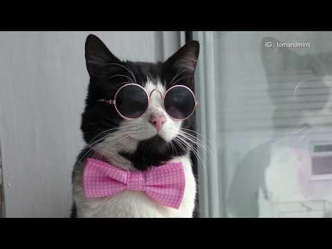 Very Stylish Cat : 4K Ultra Hd 2160p