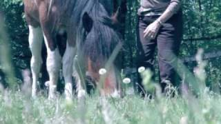 Intuitive Horse Readings (Horse Whispering)