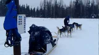 アラスカンハスキー犬が曳く犬ぞりツアー 準備編2 フェアバンクス郊外 ...