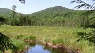 Surviving the Wilderness 2 - Episode 22 - Trying to Reach the Pond