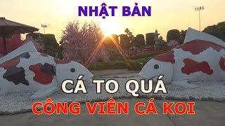 CÔNG VIÊN CÁ KOI NHẬT BẢN / RIN RIN PARK / THẬT BẤT NGỜ
