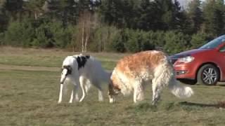 Летящие собаки.