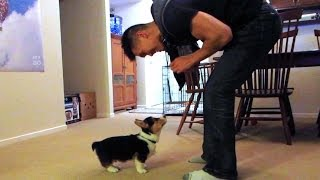TRAINING MY CORGI PUPPY - Life After College: Ep. 338