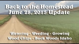 Back to the Homestead - June 2015 Homestead Update