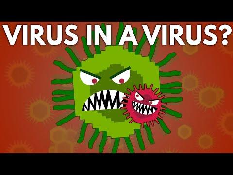 Can a Virus Get a Virus?