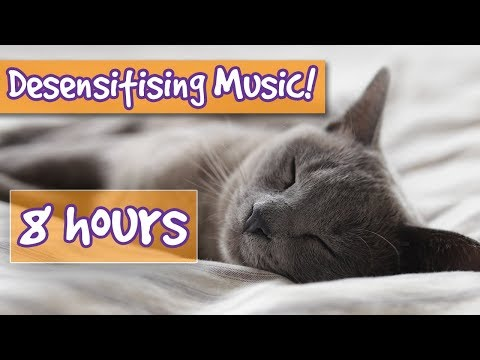Desensitising Cat Music! Music to Comfort Cats, Cat Sounds to Desensitise Noises, Help Anxiety!🐈💤