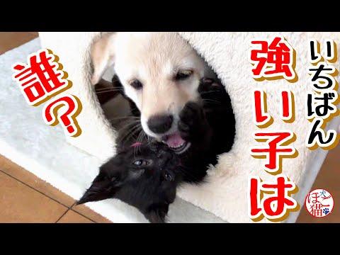 【子犬 子猫 保護犬】一番強い子は誰? 子犬と子猫どっちも強い