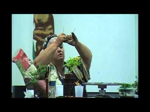 Bonsai Artisans: Shirey Kavanaugh -Mame Boxwood