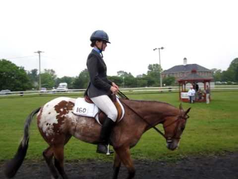 JC - Hunter Under Saddle - Left
