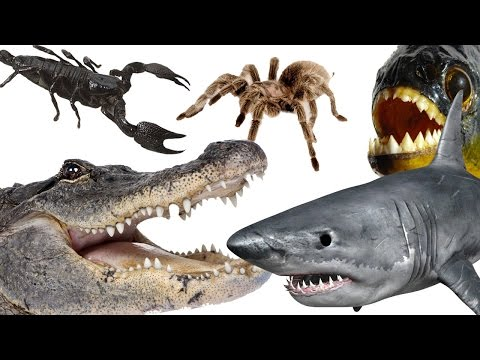 Thumbnail: Top 10 Most Dangerous Animals In The World