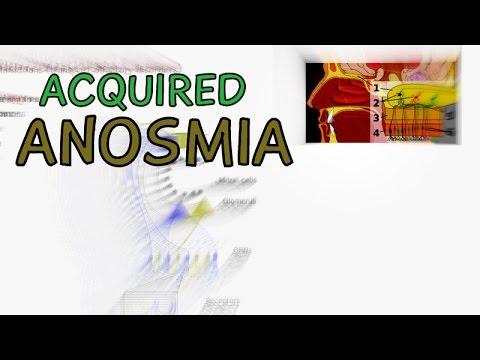 Cranial Nerves - Olfactory Nerve Disorders - Acquired Anosmia - Infections Trauma Meningioma