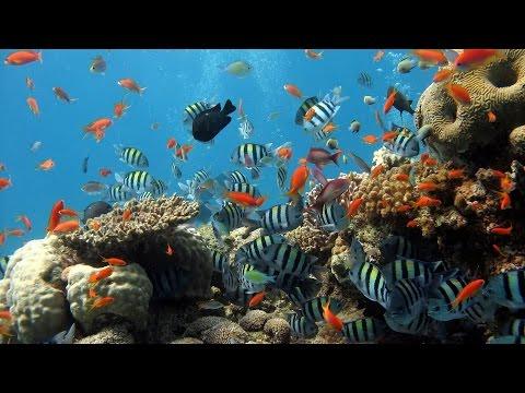 Snorkeling at TANJUN JEPUN Padangbai Bali Indonesia