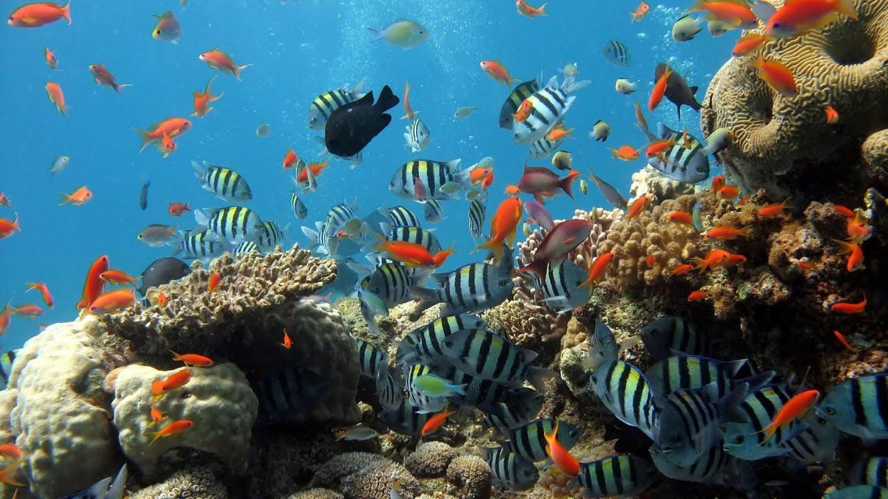 Hasil gambar untuk PADANG BAY snorkeling
