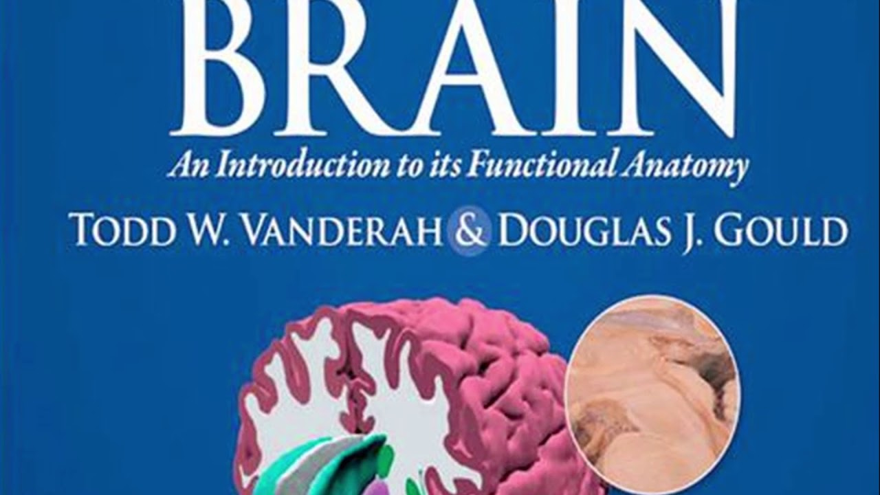 The Human Brain Nolte Pdf