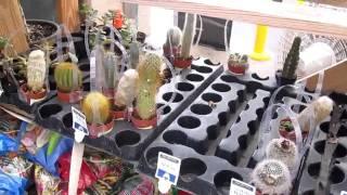 № 374 США Садовые растения и цветы в магазине Lowe's дек. 2010