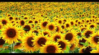 Post Malone Swae Lee Sunflower Extended Version.mp3
