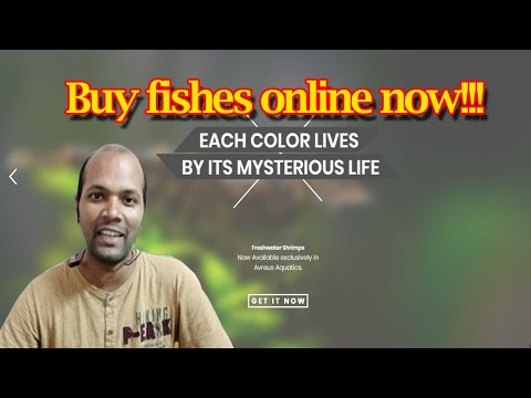 Aquarium Fish Online Delivery | Bangalore | Hindi