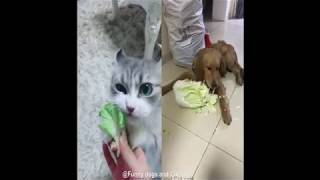 DOGS AND CATS EAT SPECIAL FOOD| Funny DOG videos and cats videos that will make you LAUGH