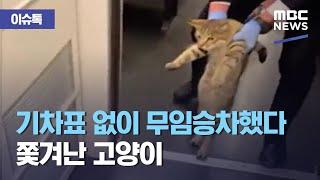 [이슈톡] 기차표 없이 무임승차했다 쫓겨난 고양이 (2…