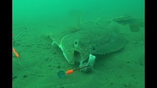 Камбала 2018 Уссурийский залив Юнга  Flounder 2018