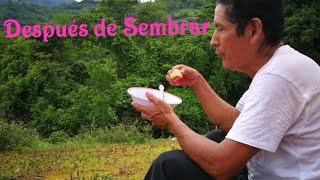 Almuerzo Con Gallina En El Campo