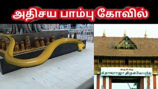 miracle snake temple in nagercoil | அதிசய பாம்பு கோவில் | sithargal | சித்தர்கள்
