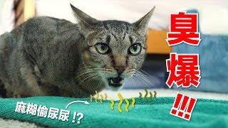 臭爆-麻糊妳-貓家終極清潔大挑戰-好味貓日常-ep46