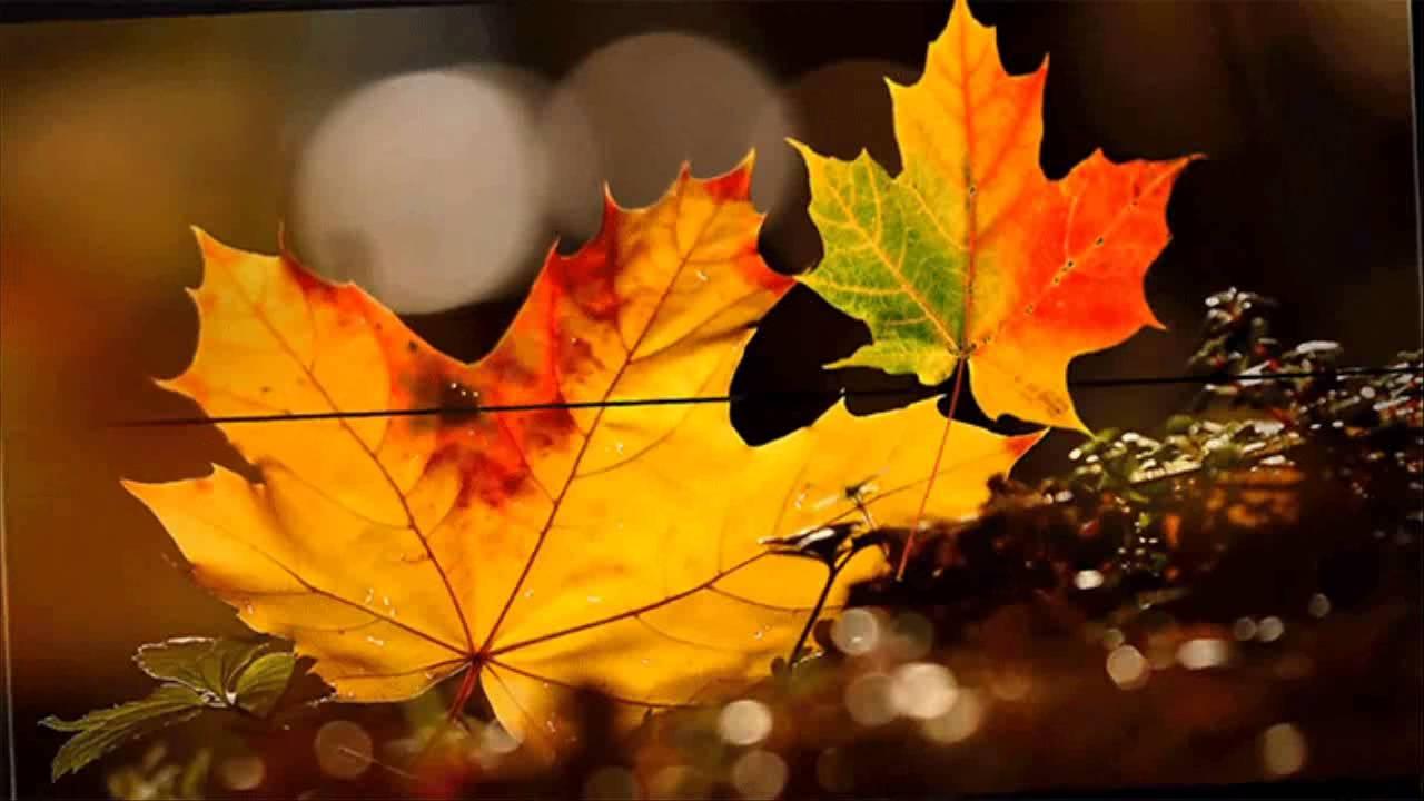 Лечение кленовыми листьями суставов отзывы восстановление после разрыва связок голеностопного сустава