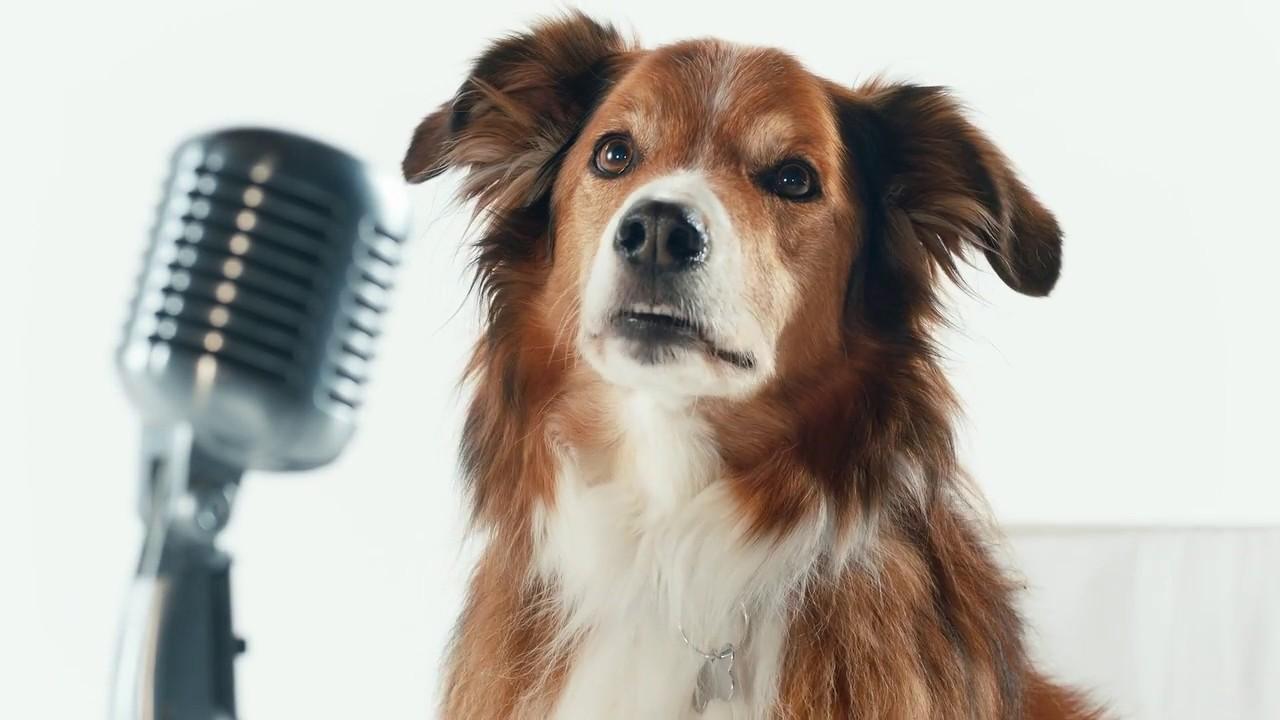 Performatrin Premium Formulated Dog Amp Cat Food Youtube