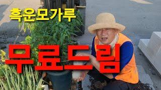 1천명 무료드림 흑운모 가루 고추 비트 가지 옥수수 토…