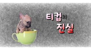 귀여운 티컵 강아지의 잔인한 진실