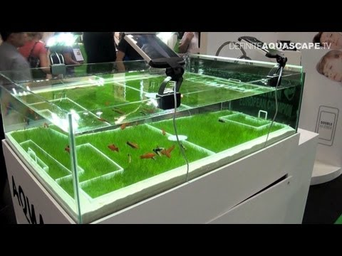 Creating an inverted aquarium for pond youtube music lyrics for Inverted fish tank