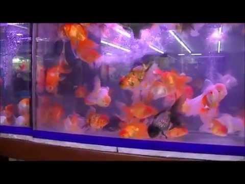 The World`s largest ornamental Fish Market, Thailand - Bangkok Chatuchak Market 2015 - Teil 6/6