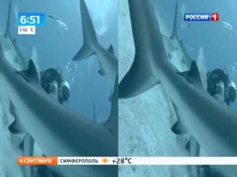 Дайвер выжил в логове акул
