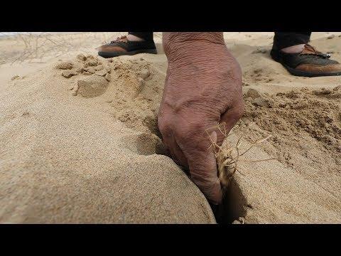 Как исчезают пустыни?